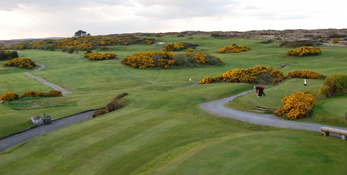 Connemara Gorse in Flower - Bearna Golf Club